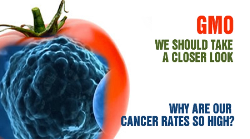 GMOs cause cancer in human