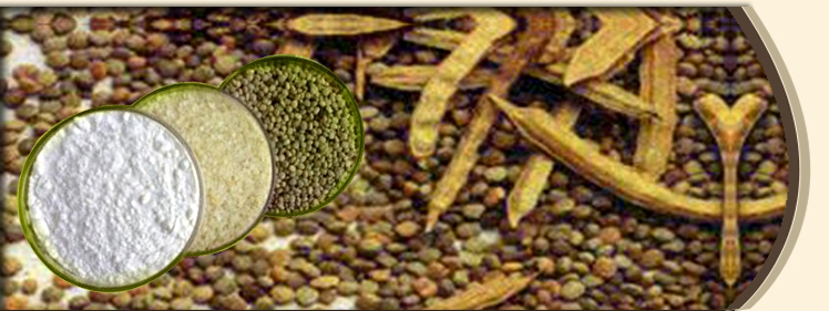 Export demand of Guar Gum is expected rise as crude oil is at three year