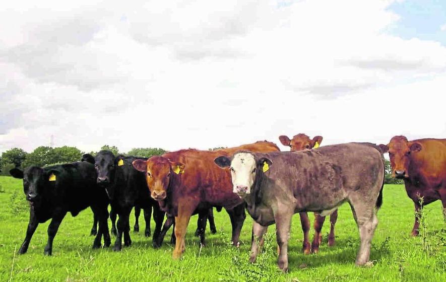 Dairy industry in Pakistan
