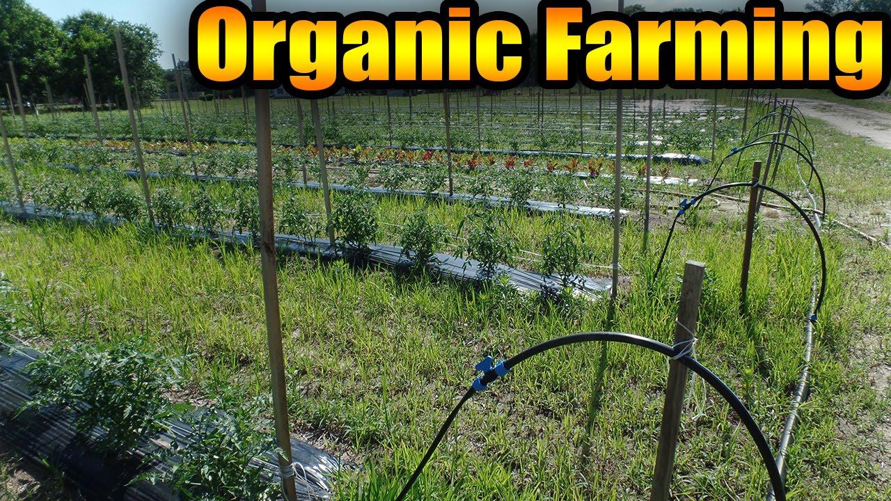 Do Small Organic Farms Need to Be Certified Organic?