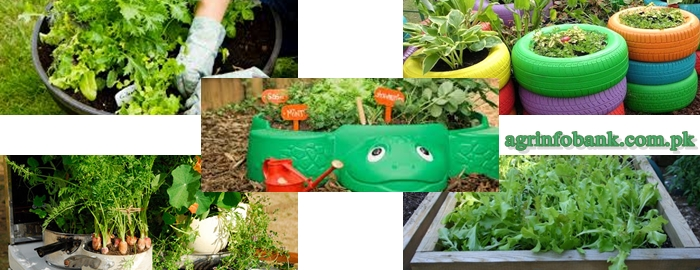 Container Gardening Fascinating our Environment