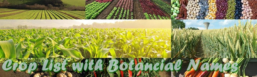 ALPHABETICAL LIST OF CROPS WITH BOTANICAL NAME