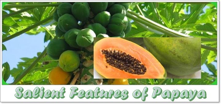 Salient Features of Papaya