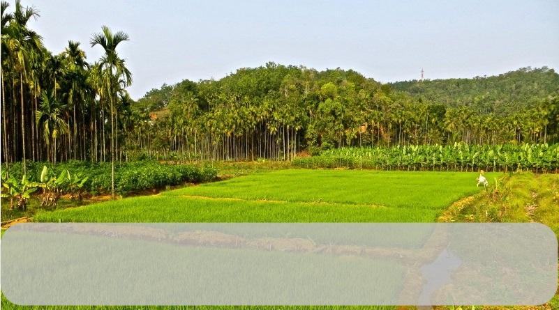 Improved method for raising rice nursery