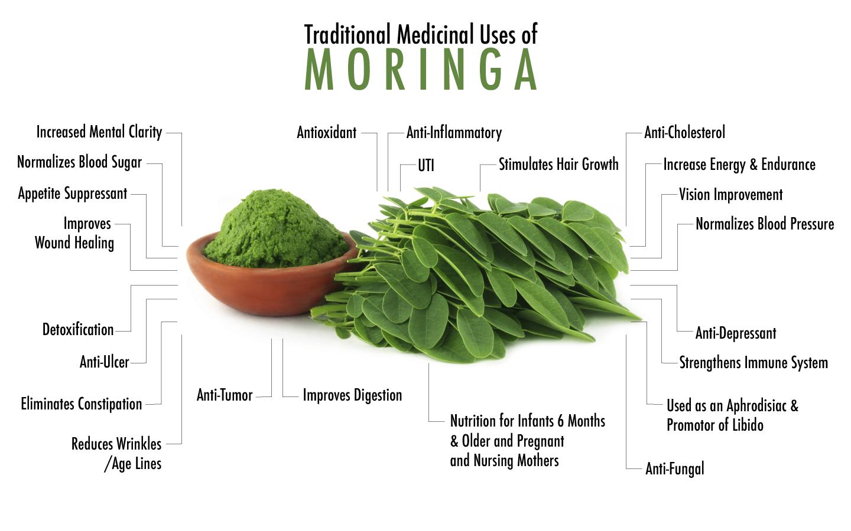 Introduction to Moringa oleifera (Sohanjana)