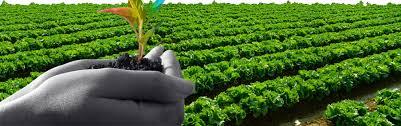 Balanced soil enlarge agriculture fertility