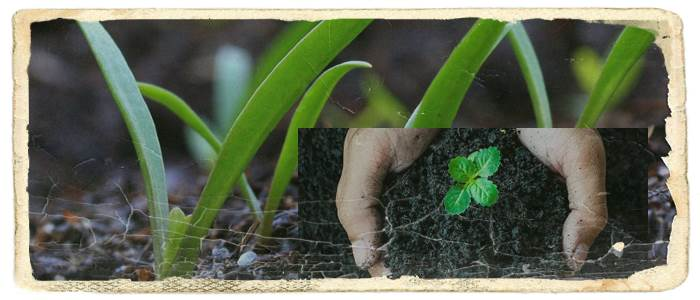 Role of Various Mineral Salts in Plant Growth
