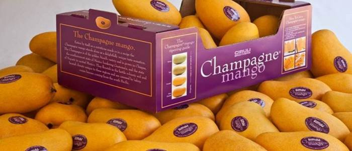 Mango exporters violating packaging policy