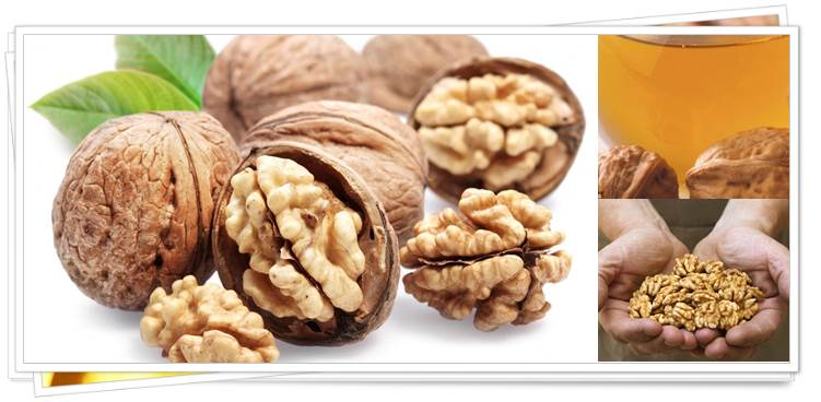 Role of Walnut in Health Improvement