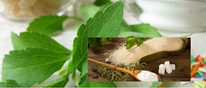 Stevia Cultivation guide for farmers in Pakistan
