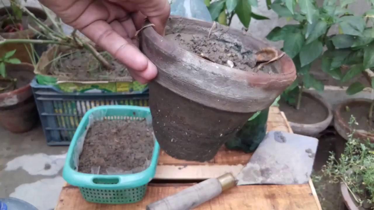 Easy start Vegetable Garden and kitchen gardening Tip