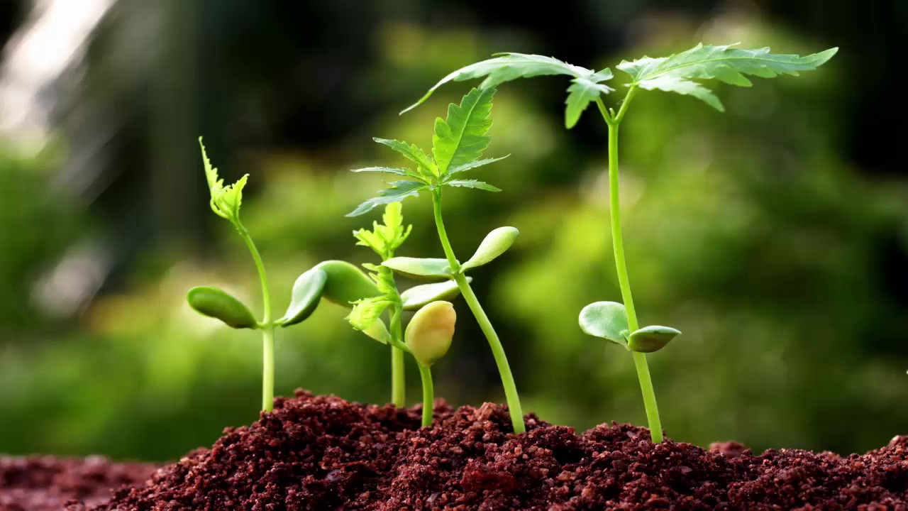 Role of Biotechnology in Agriculture