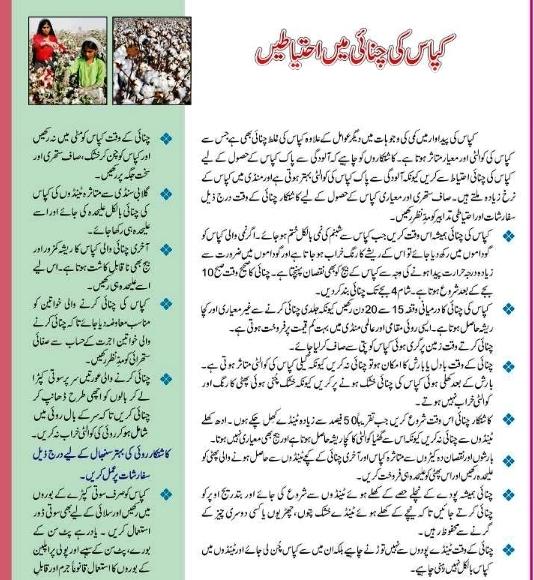 Safety precaution taking during cotton picking (Urdu)