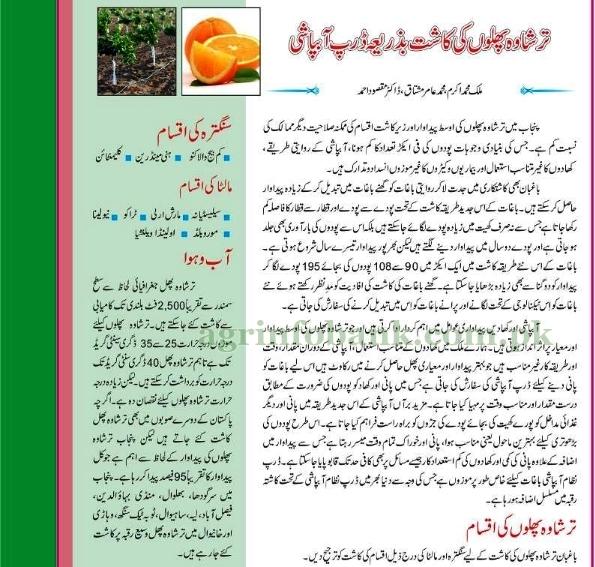 Citrus Cultivation using drip irrigation in Urdu