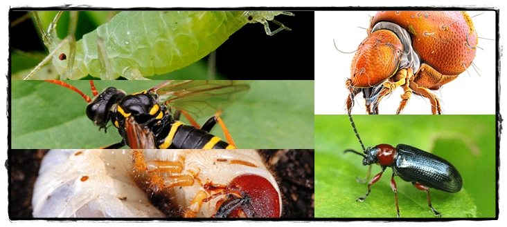Common Pests and Disease
