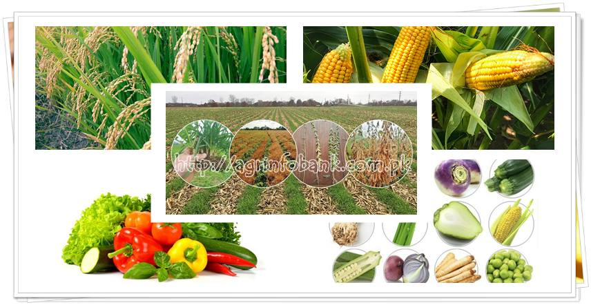 A Crop-by-Crop Guide to Growing Organic Vegetables and Fruits
