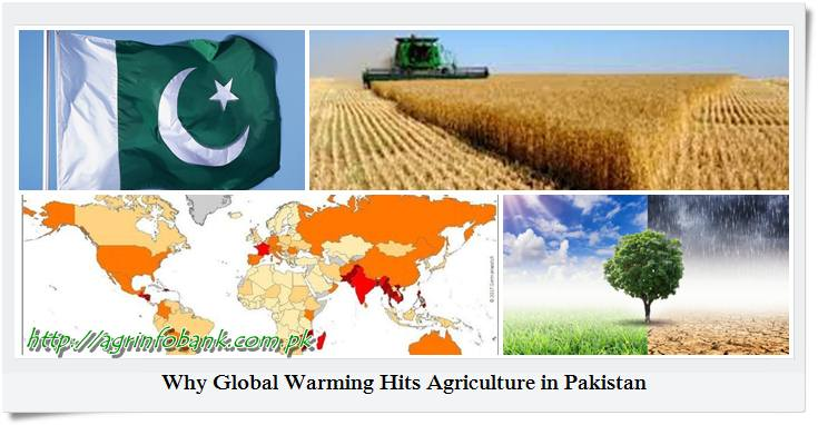 Why Global Warming Hits Agriculture in Pakistan
