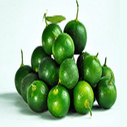 Philippines: SEARCA helps boost calamansi exports
