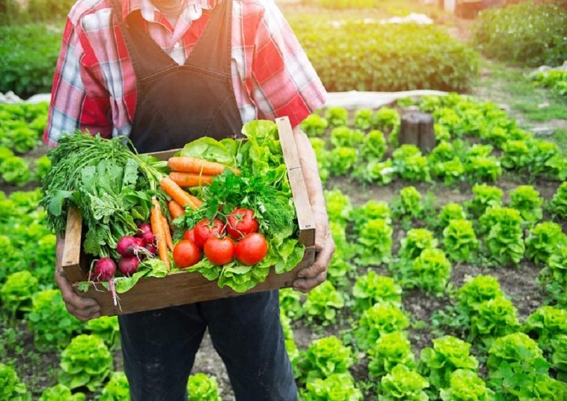 Organic Agriculture Industries Status of Pakistan