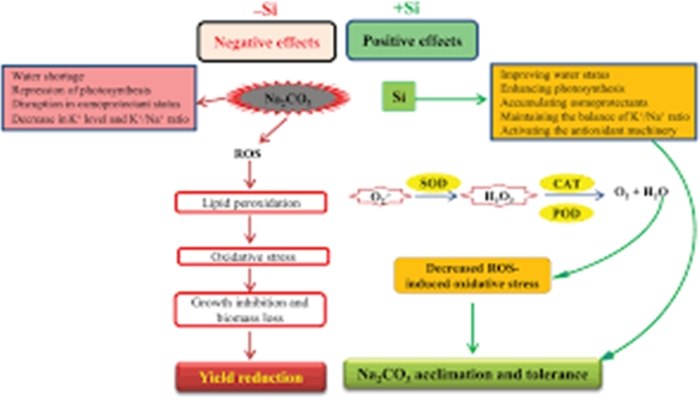Silicon Mitigates The Adverse Effect Of Salt Stress On Growth Of Different Plants