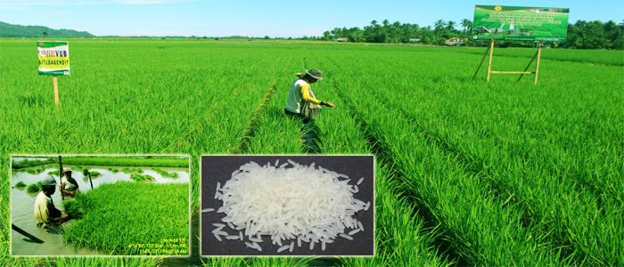 How System for Rice Intensification (SRI) mitigates greenhouse gas emissions