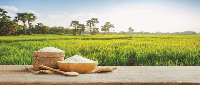 Indian Basmati varieties originate from Pakistani Kernel