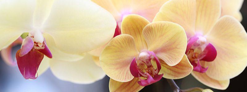 Orchids: Exotic plants