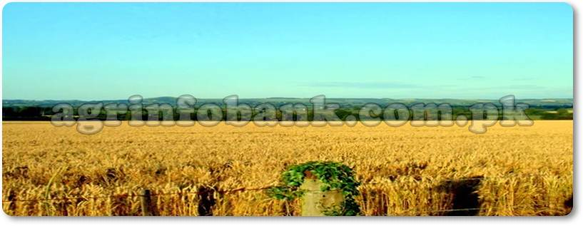 45,000 acre land made cultivable in five years
