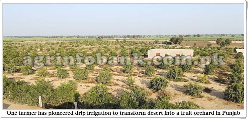Farmer turns Pakistan's sand dunes green