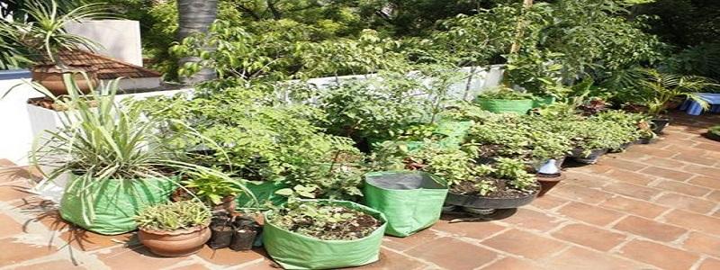 Smart Way to Start your herbs garden in Pakistan